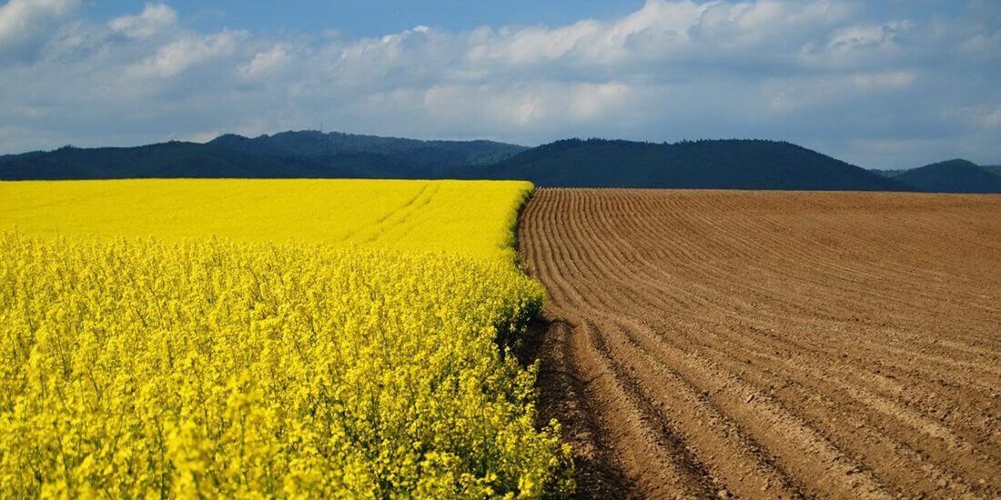 Оцінка земель сільгосппризначення: навіщо це потрібно?