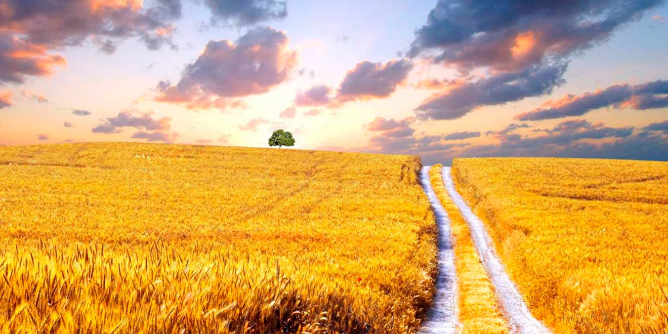 Как купить или продать землю сельхозназначения: основные рекомендации